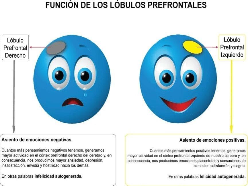 Función de los Lóbulos Prefrontales - Felicidad
