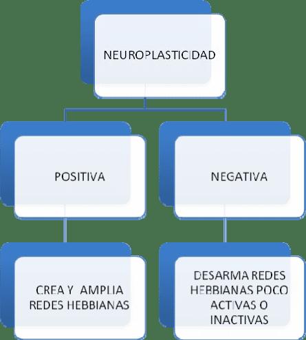 Red Hebbiana - Psicología para la felicidad