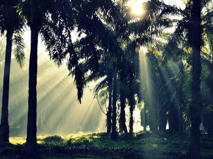Reforestación y cambio climático. Impacto del financiamiento del carbono en Honduras