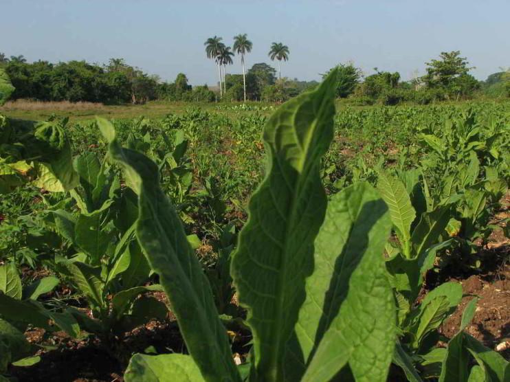 Evolución del sector Agropecuario de Cuba. 2000 – 2010
