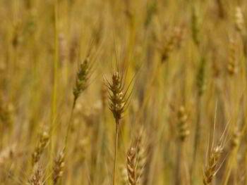 Alianzas estratégicas con empresas agroexportadoras. Opción para el comercio exterior del Perú