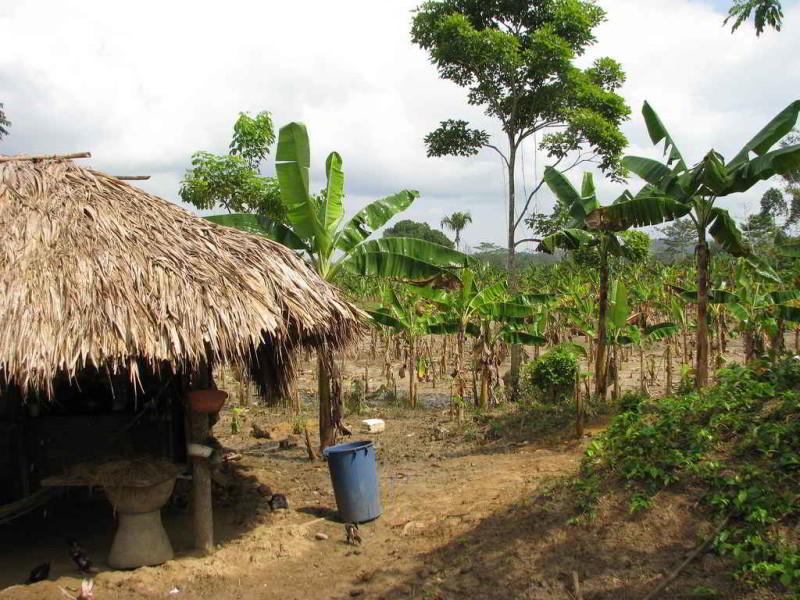 Urabá en Colombia. Banano, conflicto armado, narcotráfico, paz y ...