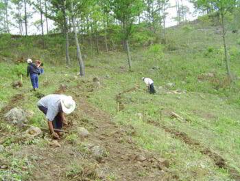 Relaciones económicas, productivas y técnico vocacionales en las Comunidades de Intibucá Honduras