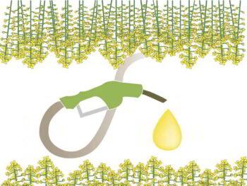 Biocombustibles. Debate sobre su viabilidad y uso para la sostenibilidad