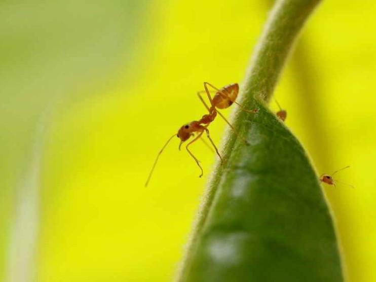 Modelo de sociedad de las hormigas como ejemplo para la humanidad