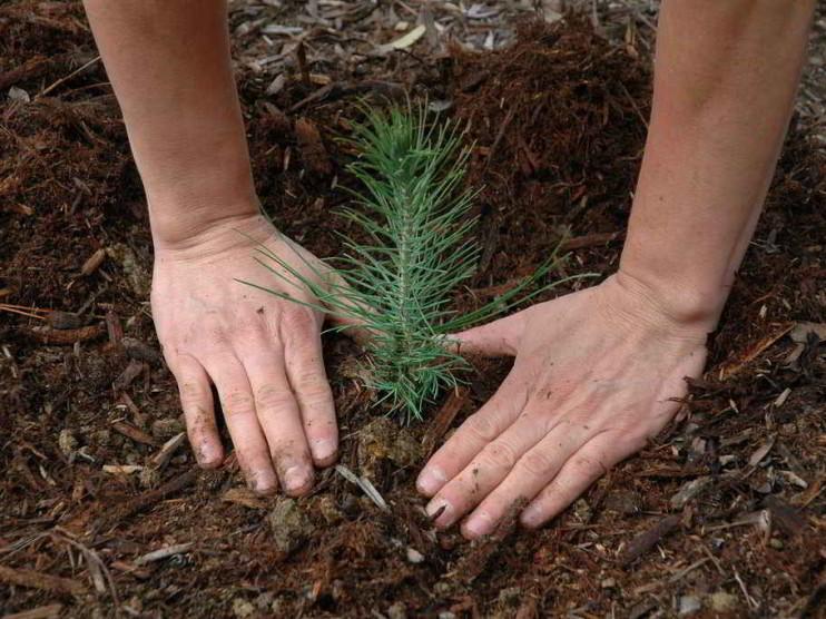 Modelo de sustentabilidad para el desarrollo sostenible