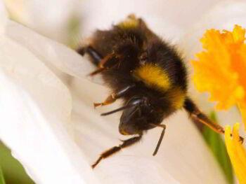 Beneficios y aportes económicos de la producción de miel de abejas