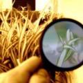 Administración y gestión de investigación e innovaciones tecnológicas