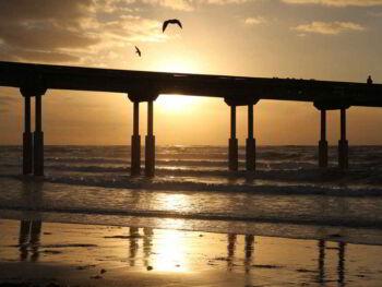 Los 5 pilares de la felicidad (PERMA)
