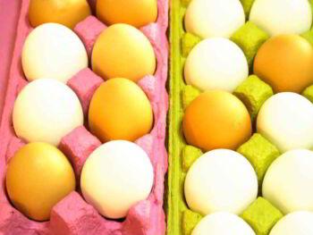 El negocio del huevo en Costa Rica