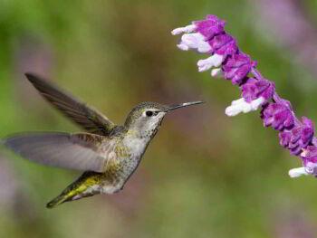El posicionamiento web después del Hummingbird de Google