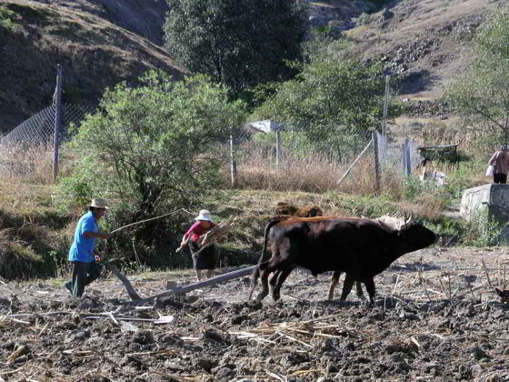 Crisis del sector agropecuario en México
