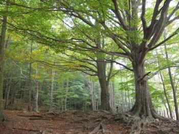 La silvicultura y su importancia en México