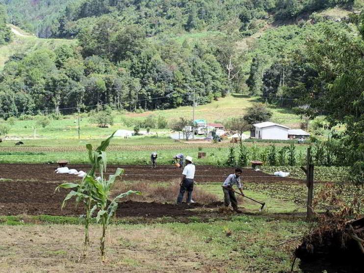 Análisis y problemática actual del campo y la agricultura en México