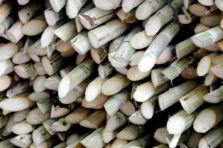 Problema de optimización de materia prima en un Ingenio Azucarero