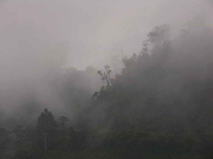 Impacto ambiental causado por actividades de producción en Chiapas México. Ensayo
