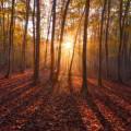 Formación en cultura ambiental para estudiantes universitarios