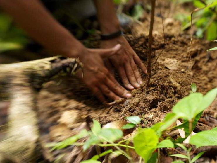 Emotivismo para la gestión ambiental y el desarrollo sostenible. Ensayo