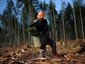 Impactos ambientales causados por actividades económicas de producción y consumo