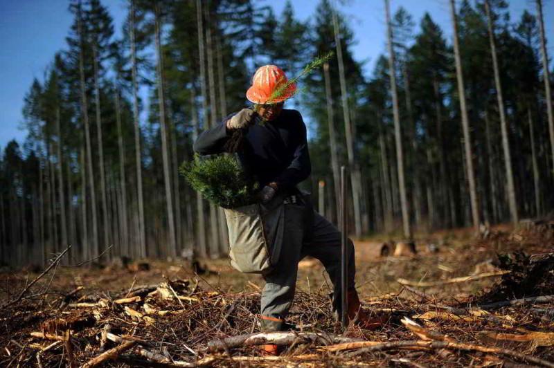 Impactos ambientales causados por actividades econ micas for Importancia economica ecologica y ambiental de los viveros forestales