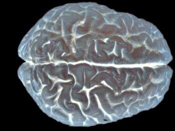 Aportes de la neuroeconomía a la teoría del consumidor