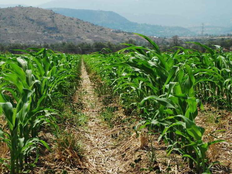 Política agropecuaria en México