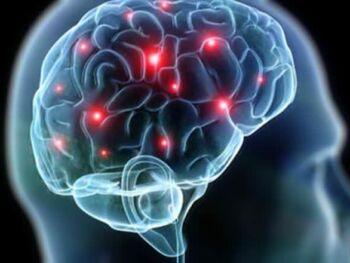 Gerencia y cerebro humano como parte del sistema cuerpo alma y espíritu