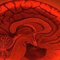 Neurociencia y el estudio integral del ser