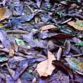 Proyectos ambientales escolares para la conservación del bosque seco tropical en una comuna de Santa Marta Colombia