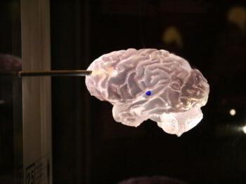 Neuroeconomía, empatía y capitalismo colaborativo