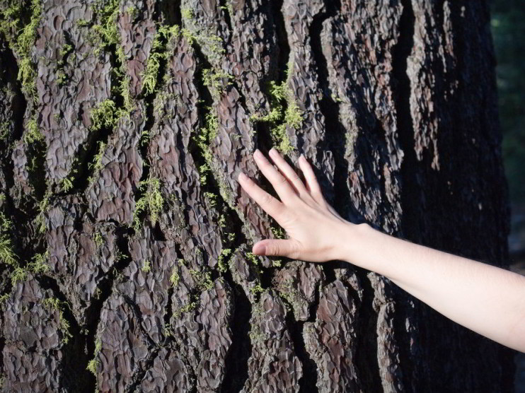 Estrategia pedagógica para la educación ambiental en estudiantes universitarios
