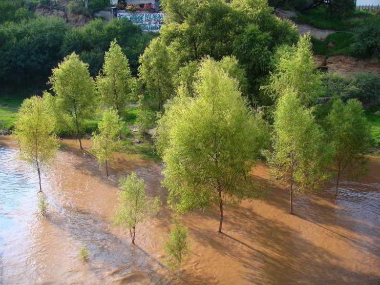 El protocolo de Kioto y su impacto en la economía ambiental de México