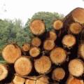Impacto ambiental por la explotación de recursos naturales