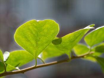 9 consejos para tener Pymes sustentables con el medio ambiente