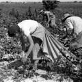 Planes para fortalecer la participación de la mujer en el Sector Agrícola de Cuba