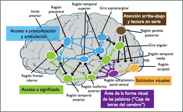 Funciones del Cerebro Humano y Aprendizaje
