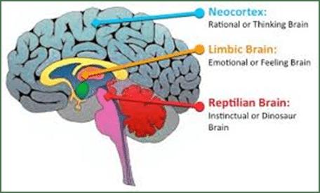 Diferentes Áreas del Cerebro Humano