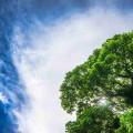 Contabilidad Financiera Medioambiental y Auditoría