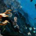 Estrategia del Océano Azul. Algo más que Innovación