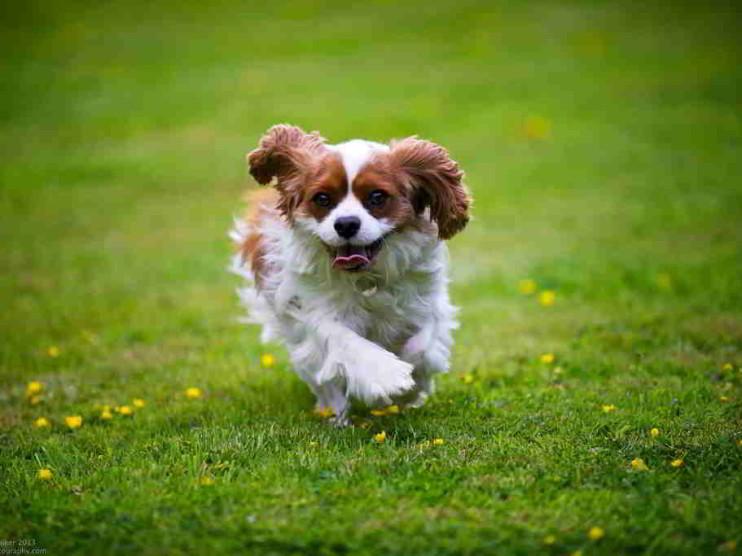 6 consejos para empezar tu día con alegría y entusiasmo