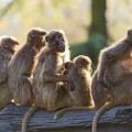 Grupos formales e informales y su importancia