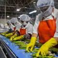 Herramientas de Gestíon Sistémica en Organizaciones Agro Empresariales