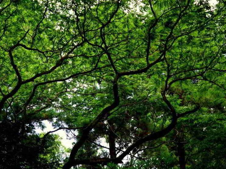 Situación financiera de la Empresa Forestal Integral Ciego de Ávila Cuba