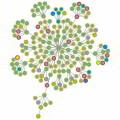 Mapeo de Alcance de Procesos y su importancia en la Organización