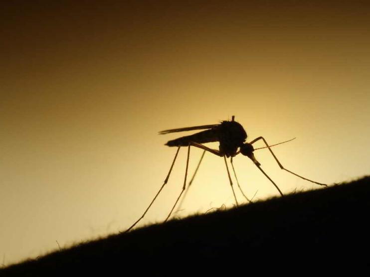 Riesgos y costos de la política sanitaria respecto al Sika y las enfermedades emergentes