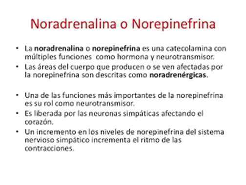 Definición de Noradrenalina