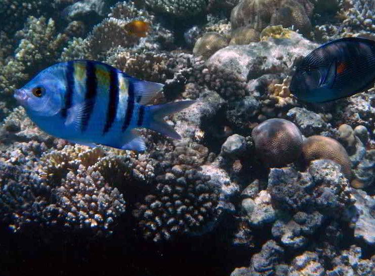 Derecho Internacional Público y protección de la diversidad marina en Costa Rica