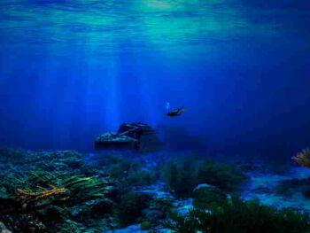 Innovación en valor. Estrategia del Océano Azul