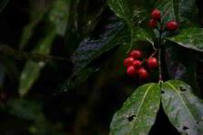 ¿Qué pasa con el Agro en Colombia?