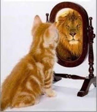 Imagología. Poder de la Imágen Ejemplo Gato - León